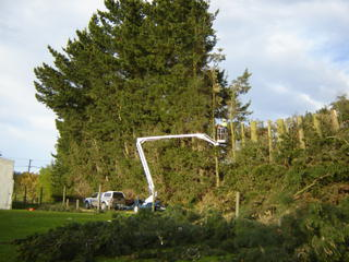 tree topping & controlled felling