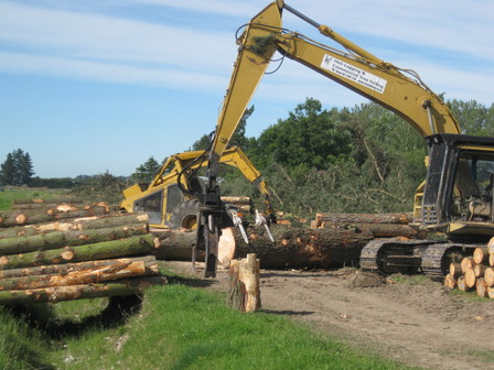 large timber logging