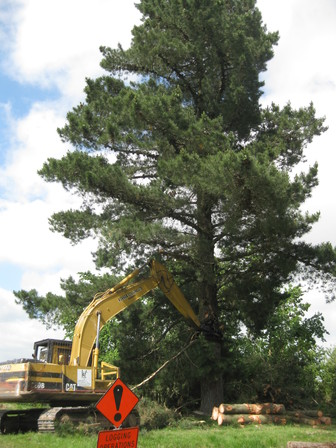 backpulling large trees